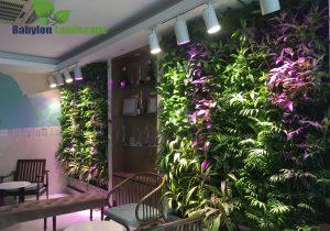 vườn tường xanh lựa chọn mới cho không gian đô thị