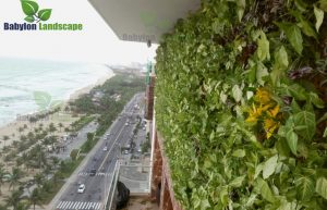 Thi công vườn tường khí canh trên tầng 14 tòa nhà TMS - Đà Nẵng
