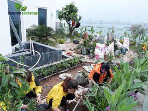 Nhà thầu thi công vườn trên mái nhà chuyên nghiệp tại việt Nam