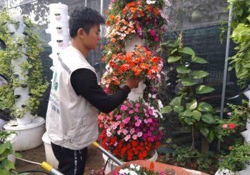 Các bước làm vườn đúng khí canh - đưa cây lên trụ khí canh