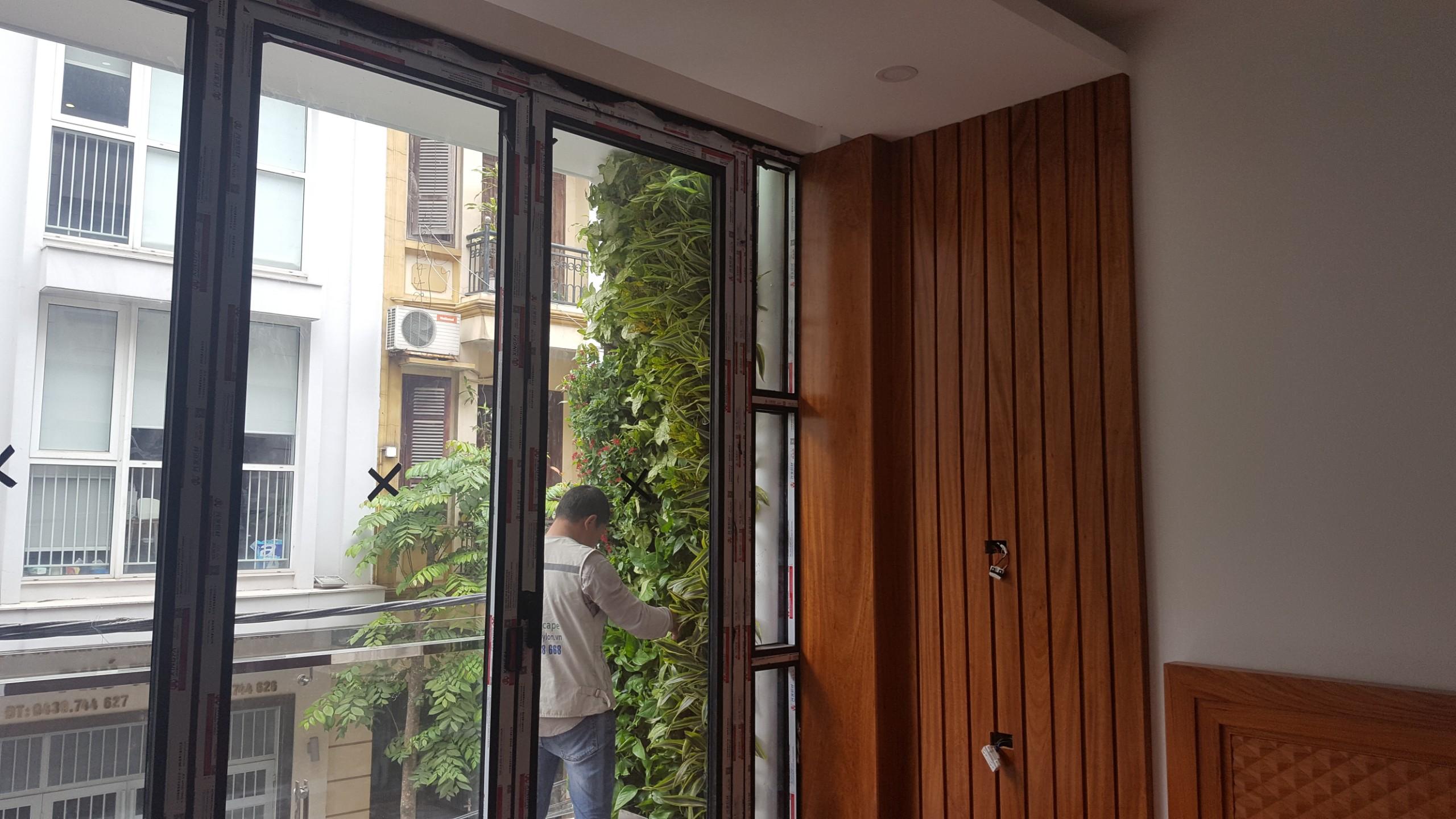 8 loại cây xanh làm tường cây cho nhà phố