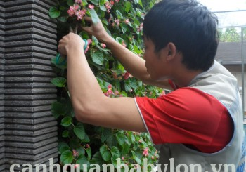 Chăm sóc vườn đứng