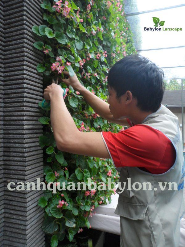 Hướng dẫn tự chăm sóc vườn đứng dạng modul giá thể