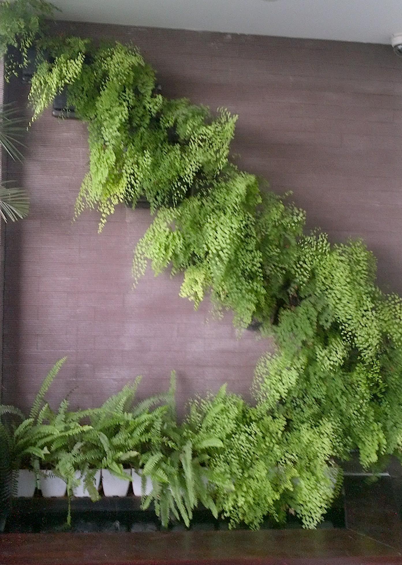 ban công xanh, tường cây xanh