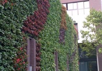 Tường cây xanh kết hợp với bể bơi tại Mỹ Đình Hà Nội