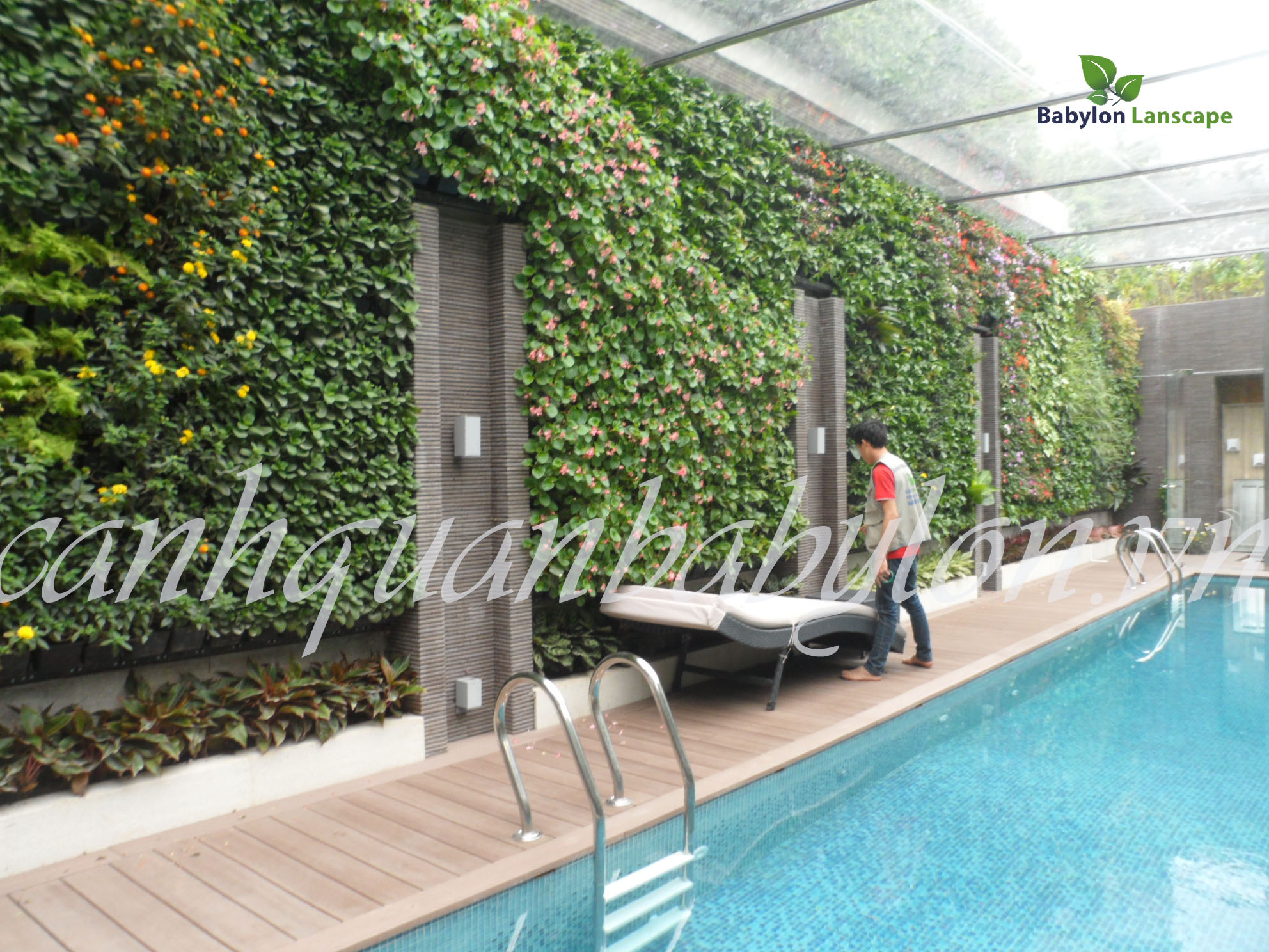 Vườn thẳng đứng tại khuôn viên thiết kế bể bơi nhà anh Quyết - khu đô thị Mỹ Đình II