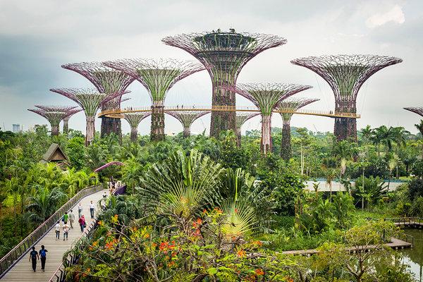 Siêu cây khổng lồ tại singapore