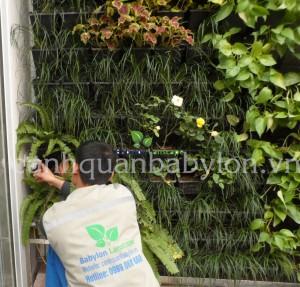 Tuyển Nhân viên dịch vụ chăm sóc vườn đứng