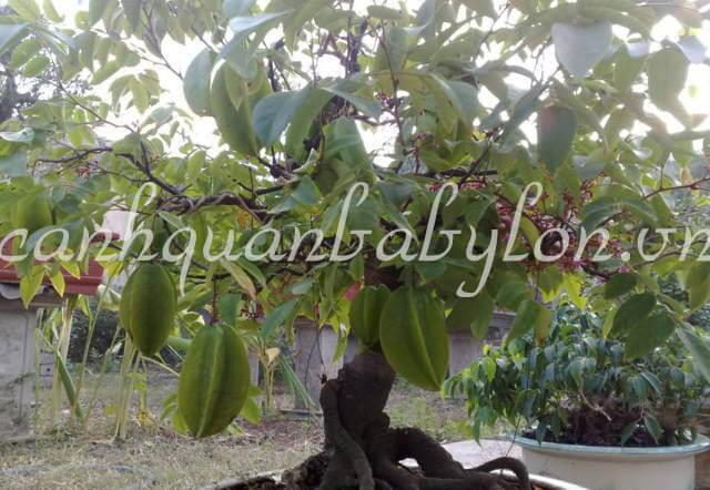 Cây ăn quả, cây bóng mát