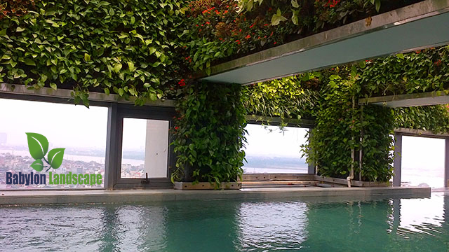 Vườn đứng nội thất và bể bơi