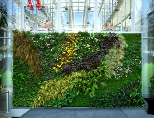 6 loại hoa quanh năm cho vườn tường luôn rực rỡ
