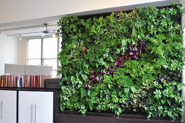 Ứng dụng tường cây xanh cho không gian nội thất