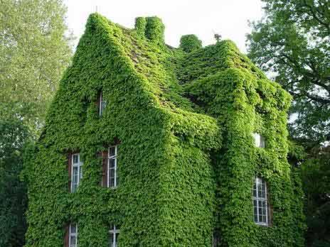 Những công trình Tường xanh nổi tiếng thế giới.