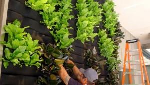 phương pháp thi công vườn tường thủy canh