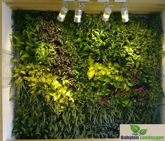 Cây trồng vườn tường nội thất