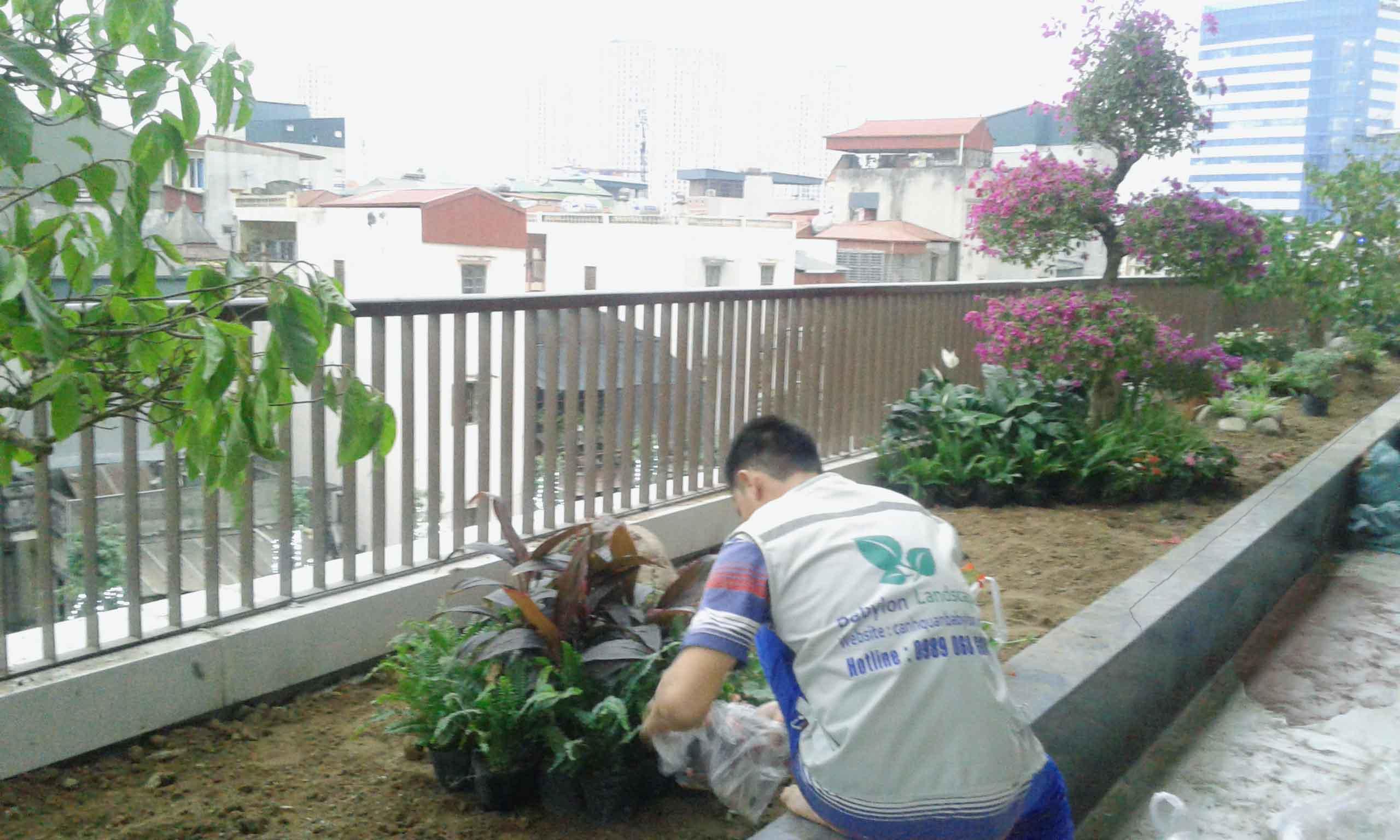 Thi công vườn trên mái Mipec