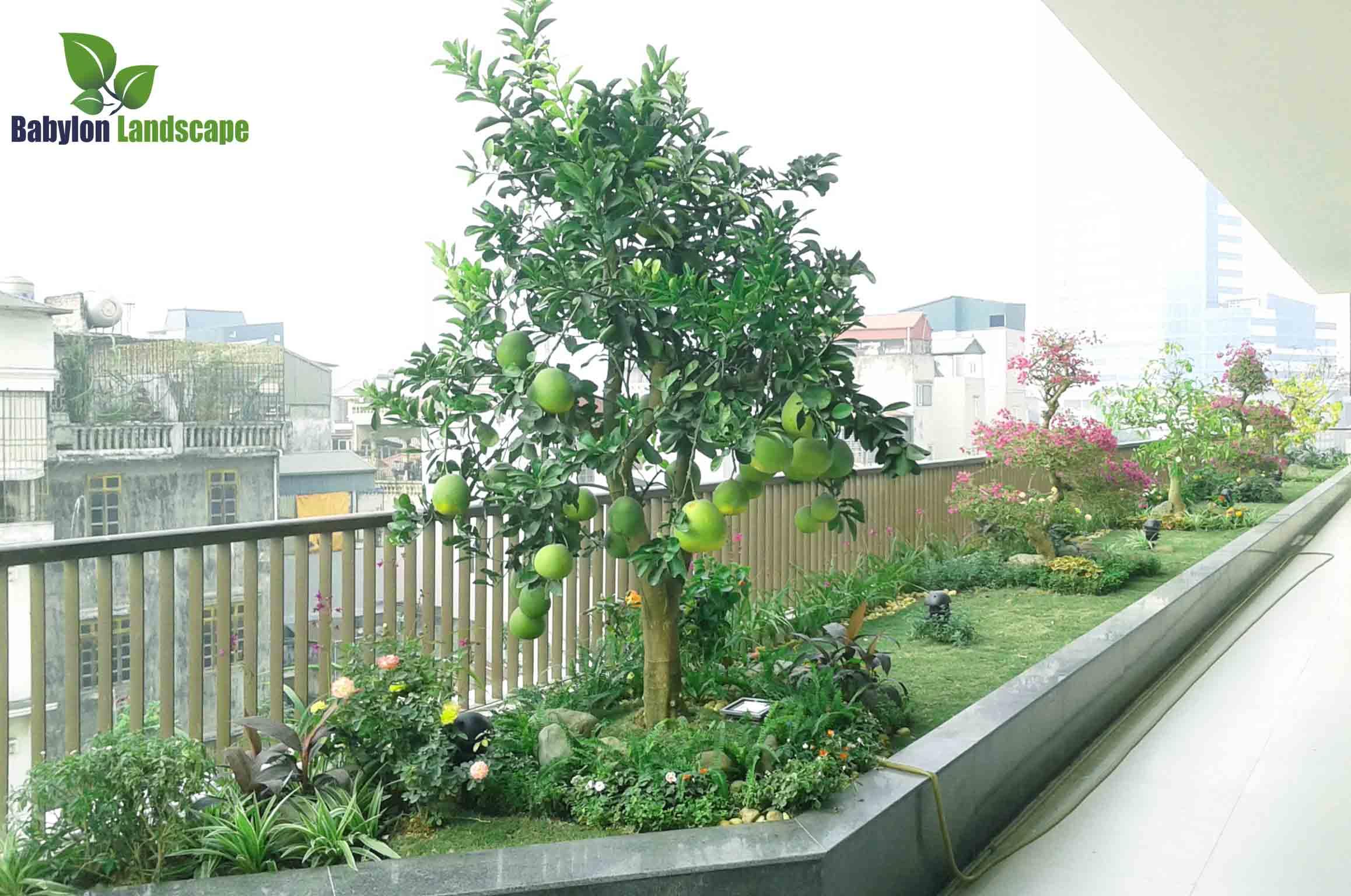 Quy trình thi công vườn trên mái Mipec