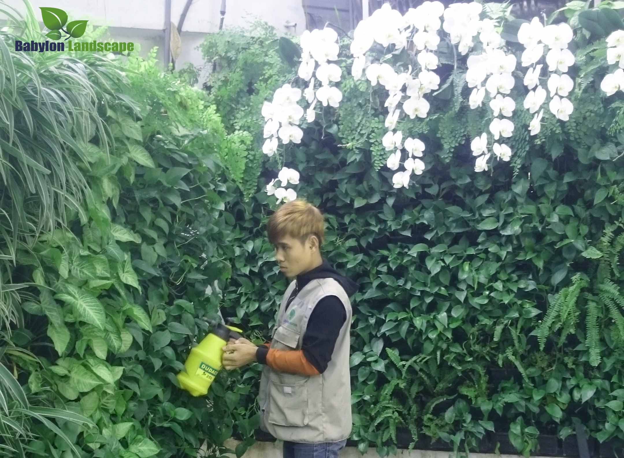 Dinh dưỡng cho cây trồng vườn đứng