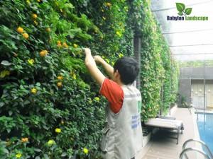 Thi công cảnh quan sân vườn - vườn tường ngoại thất tại Mỹ Đình - Hà Nội