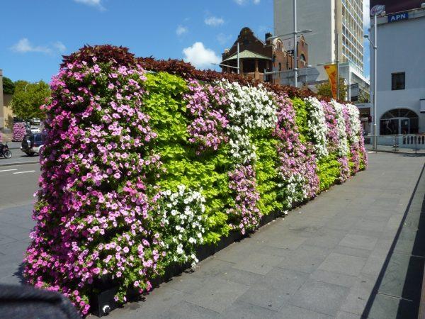 8 loại hoa theo mùa đẹp nhất cho vườn tường