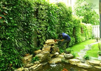 Chăm sóc bảo dưỡng vườn treo tường tại Việt Trì - Phú Thọ