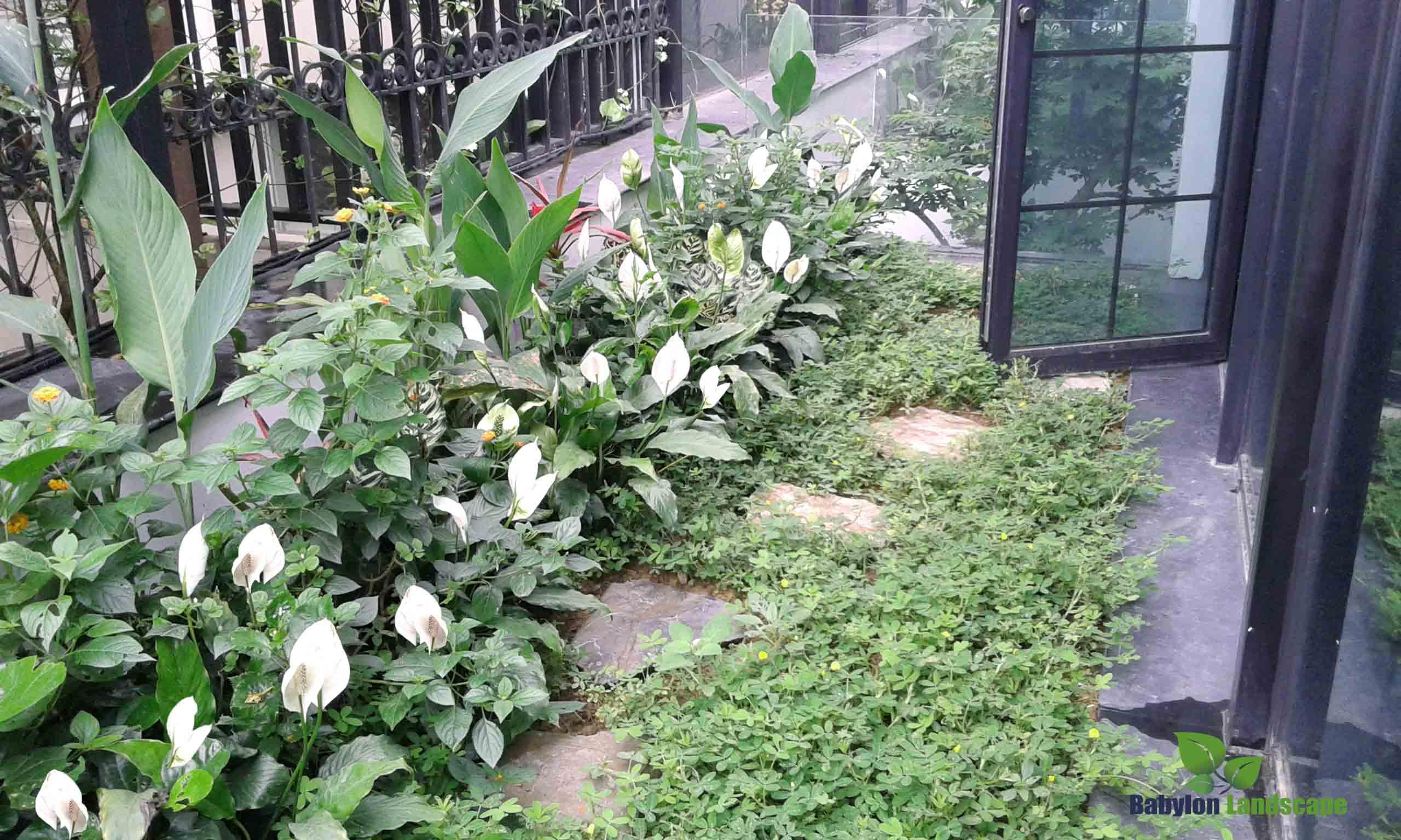 vườn biệt thự