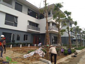 Những công đoạn cuối cùng trong thi công sân vườn ở khu đô thị mới Bắc An Khánh