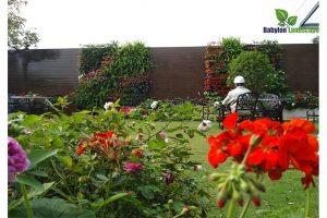 Vườn đứng sử dụng tưới nhỏ giọt