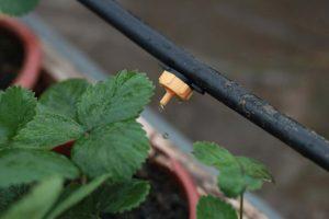 Hệ thống tưới nhỏ giọt cho vườn thẳng đứng