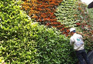 vườn đứng sử dụng hệ thống tưới nhỏ giọt