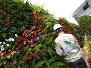 Lựa chọn cây phù hợp cho từng loại vườn đứng.