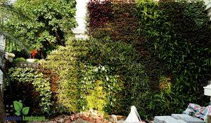 Hoàn thiện vườn trên tường tại khu đô thi Ciputra