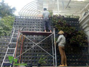 Thi công vườn treo tường tại khu đô thị Ciputra