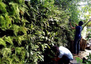 Thi công vườn treo tường bệnh viện Melatec Nghĩa Dũng