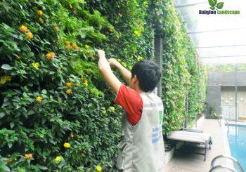 Thi công vườn trên tường Lô 12D4 Khu đô thị Ciputra