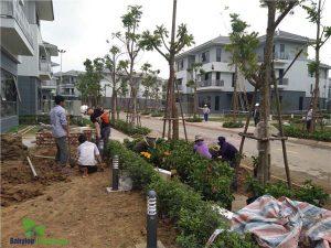 Cảnh Quan Babylon thi công sân vườn chuyên nghiệp