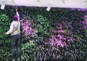 Đèn chiếu sáng - vật liệu để làm vườn tường