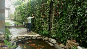 Giải pháp chống nóng bằng vườn tường