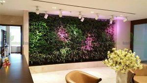 Vườn cây treo tường hoàn thiện tại Hoàng Đạo Thúy - Hà Nội
