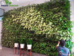 Trồng cây trên tường bằng phương pháp module tại trường UNIS - Hà Nội