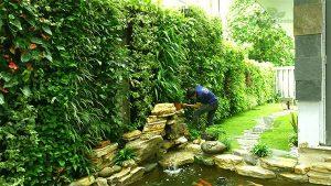 Trồng cây trên tường bằng phương pháp module