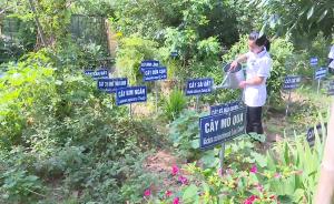 Cung ứng nguồn nguyên liệu cho vườn cây thuốc nam