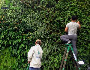 thi công cây xanh treo tường tại khu đô thị Ciputral - Hà Nội