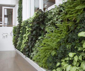 thi công cây xanh treo tường - vườn tường - vườn thẳng đứng tại Hà Nội