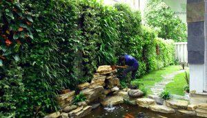 Thi công tường xanh tại việt trì - Phú Thọ
