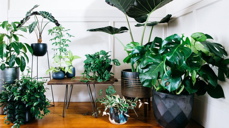 5 loại cây trồng trong nhà không cần ánh sáng