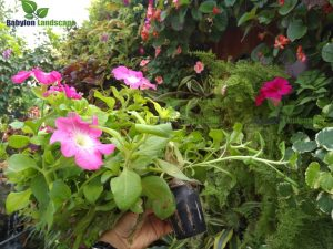 Vườn thẳng đứng khí canh có thể trồng các loại hoa theo mùa