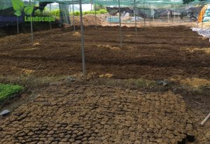 Cách làm vườn đứng khí canh - bước 1 ươm cây