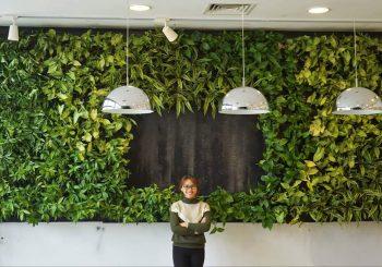 Thiết kế và thi công vườn thẳng đứng, vườn tường theo yêu cầu chủ đầu tư.