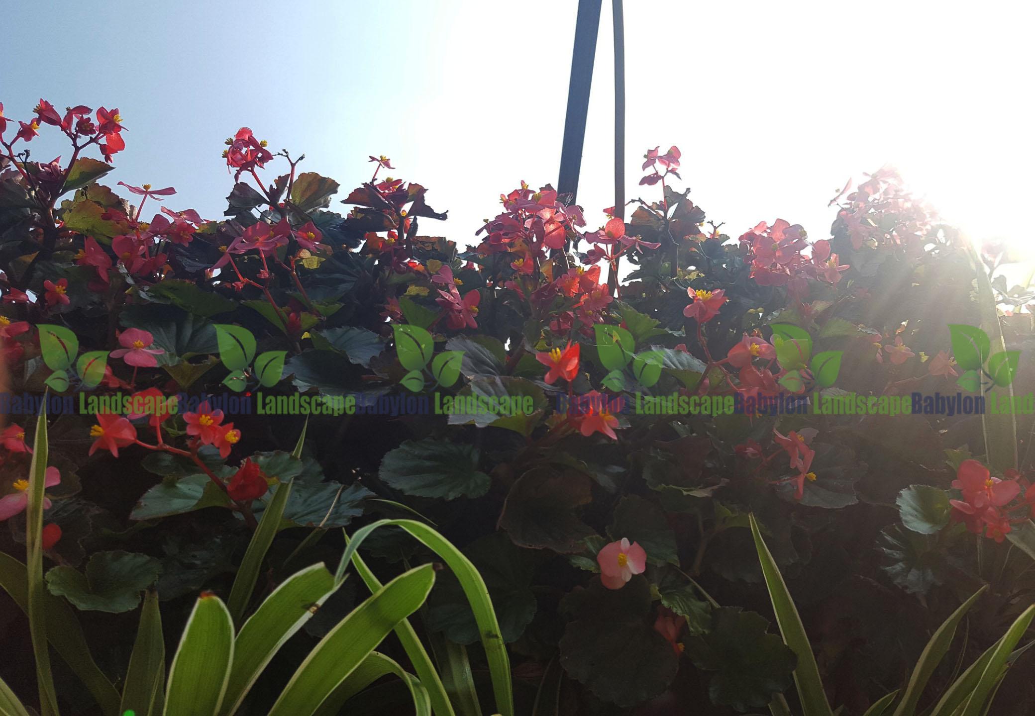 Những loại hoa đẹp cho vườn tường khí canh theo mùa